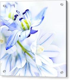 First Spring Flowers Acrylic Print by Elena Elisseeva