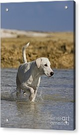 Fishing Dog Of Polynesia Acrylic Print by Jean-Louis Klein & Marie-Luce Hubert