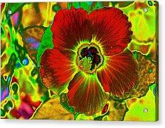 Flaming Hibiscus Acrylic Print