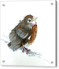 Fledgling Robin Acrylic Print