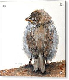 Fledgling Sparrow Acrylic Print