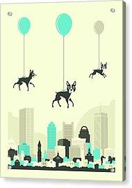 Flock Of Boston Terriers Acrylic Print