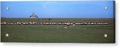 Flock Of Sheep Grazing In A Field Acrylic Print by Panoramic Images