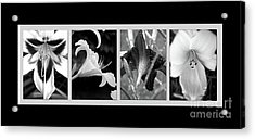 Floral Collage Acrylic Print by Sue Stefanowicz