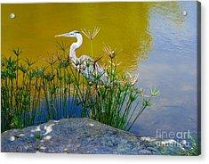 Florida Heron Acrylic Print by Andrea Simon