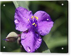 Acrylic Print featuring the photograph Flower by Heidi Poulin