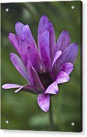 Flower Acrylic Print by Svetlana Sewell