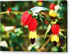 Flowering Plant Acrylic Print by Michael C Crane