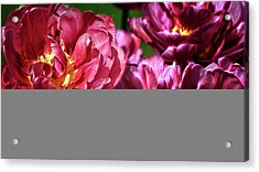 Flowers And Fractals Acrylic Print