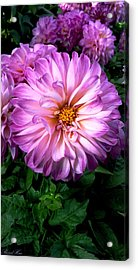 Acrylic Print featuring the photograph Flowers by Bernd Hau