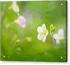 Flowers Whisper Beauty Acrylic Print