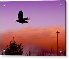 Fly By Acrylic Print by Chrissy Gibbs