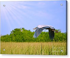 Fly Low Acrylic Print