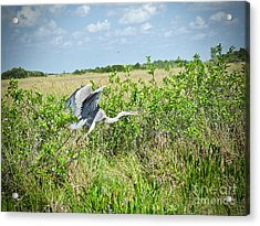 Fly On By Acrylic Print by Judy Kay