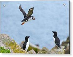 Flying Away Acrylic Print by Svetlana Sewell