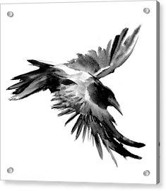 Flying Raven Acrylic Print