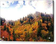Foggy Fall Acrylic Print by Marty Koch