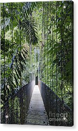Footbridge In Costa Rican Forest Acrylic Print by Jeremy Woodhouse