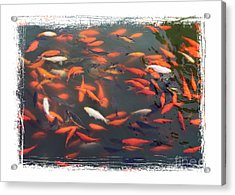 Koi Pond With Framing Acrylic Print by Carol Groenen
