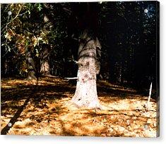 Forest Entrance Acrylic Print by Paul Sachtleben