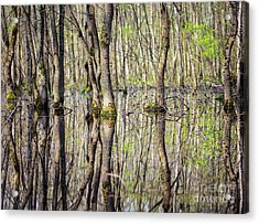 Forest In The Swamp Acrylic Print by Catalin Petolea