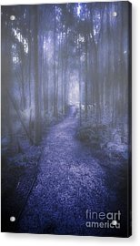 Forest Of Darkness Acrylic Print by Jorgo Photography - Wall Art Gallery