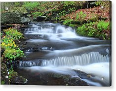Forest Stream And Marsh Marigolds Acrylic Print by John Burk