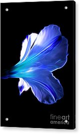 Forget Me Not Acrylic Print by Krissy Katsimbras