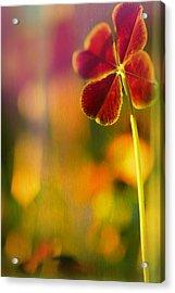 Four-leaf Clover Acrylic Print by Bonnie Bruno