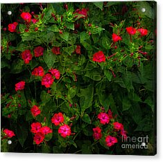 Acrylic Print featuring the photograph Four O'clock by Ann Jacobson