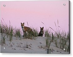 Fox And Vixen Acrylic Print