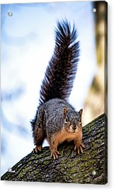 Acrylic Print featuring the photograph Fox Squirrel On Alert by Onyonet  Photo Studios
