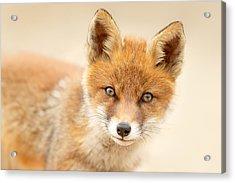 Foxy Face Acrylic Print by Roeselien Raimond