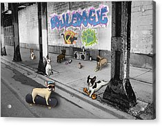 Frenchie Street Gang Acrylic Print