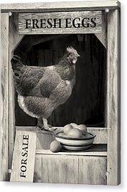Acrylic Print featuring the photograph Fresh Eggs by Robin-Lee Vieira