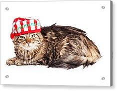 Funny Grumpy Christmas Cat Acrylic Print by Susan Schmitz