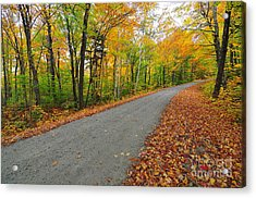 Gale River Road II Acrylic Print by Catherine Reusch Daley