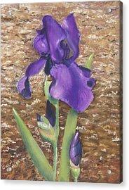 Garden Iris Acrylic Print