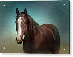 Acrylic Print featuring the photograph Gentle Soul by Debby Herold
