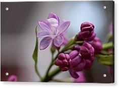 Gentle Strength Acrylic Print