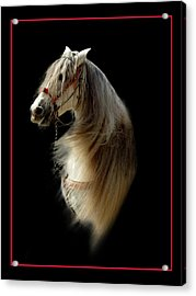 Glamour Shot Acrylic Print by Richard Gordon