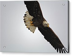 Gliding Acrylic Print