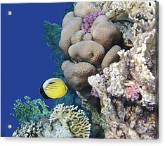 Glorious Red Sea World 3 Acrylic Print