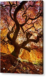 Glowing Canopy Acrylic Print