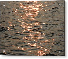 Golden Bay Acrylic Print by Kate Gallagher