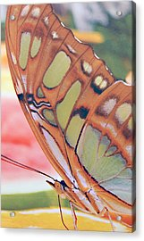 Golden Butterfly Acrylic Print by Don  Wright