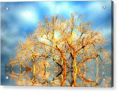 Golden Dawn Acrylic Print by Ross Powell