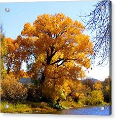 Golden Tree Acrylic Print by Gigi Kobel