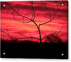 Good Evening Acrylic Print by Evelyn Patrick
