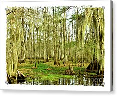 Grand Bayou Swamp  Acrylic Print by Scott Pellegrin